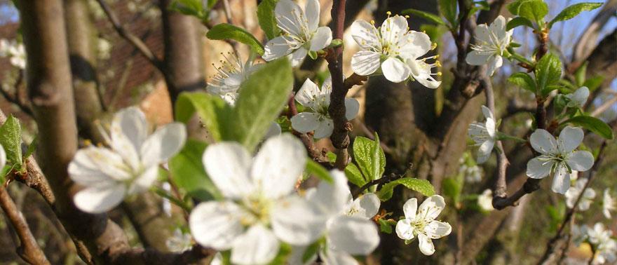 Jaro v KYBY zahradě