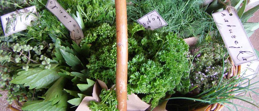 Košík s bylinkami z KYBY zahrady